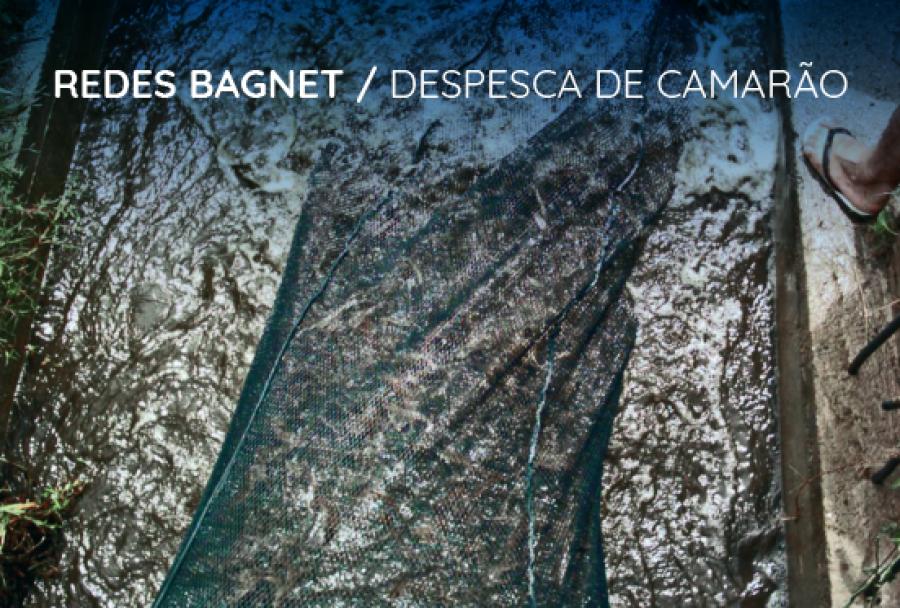 Rede para camarão: como a BagNet® se encaixa perfeitamente no seu cultivo