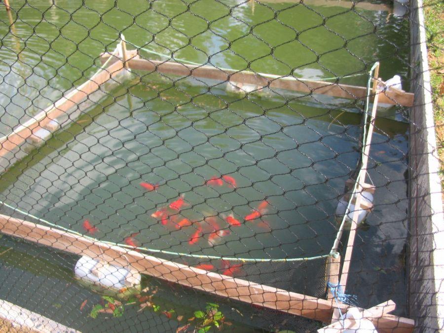 Bem-estar animal na piscicultura: conheça as melhores práticas