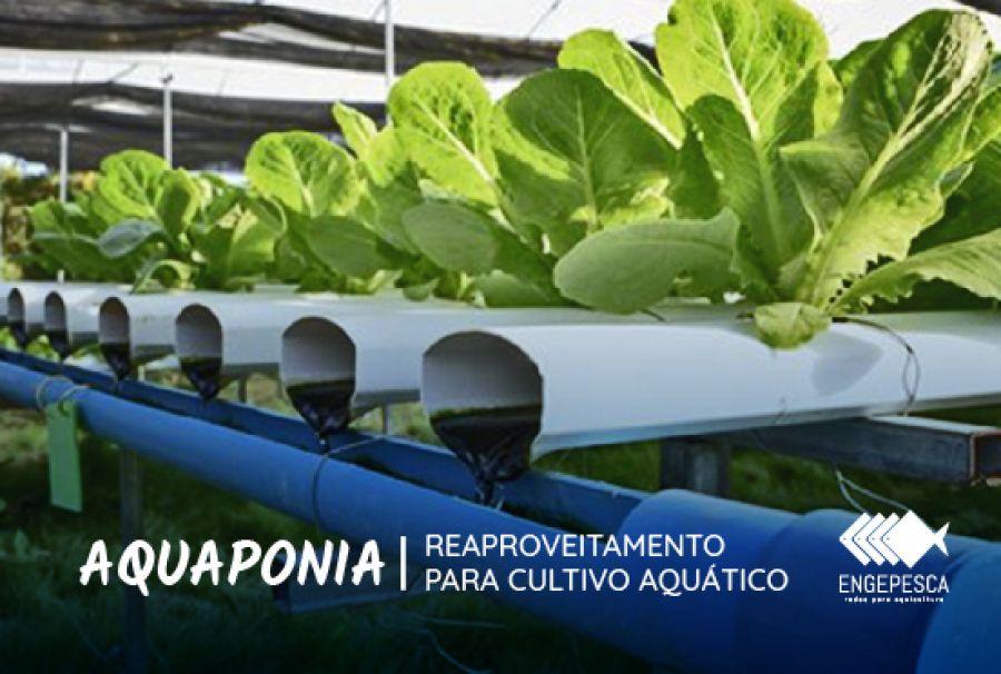 Prática de aquaponia reaproveitamento para cultivo aquático