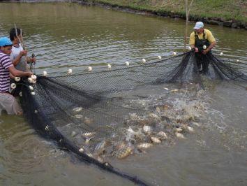Conservação das redes de pesca: Cinco dicas de cuidados básicos
