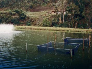 Saiba mais sobre o mercado da pesca em Santa Catarina
